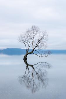 De wanaka tree, de beroemdste wilg in lake wanaka, nieuw-zeeland