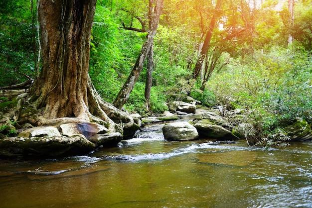 De waterval natuurlijke achtergrond is de rivierstroom van thailand benieuwd in het bos