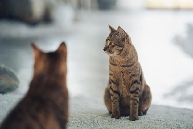 De weerspiegeling van een kat in de spiegel die naar iets zit te staren.