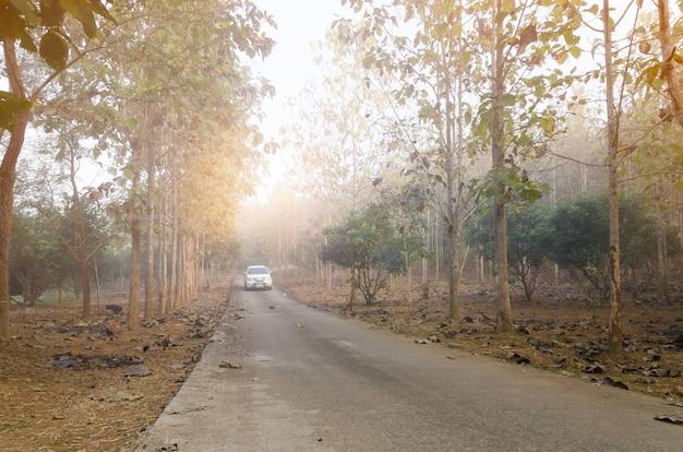 De weg door het bos