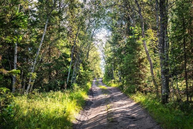 De weg door het noordelijke bos op anzer island solovetsky islands onder een blauwe hemel