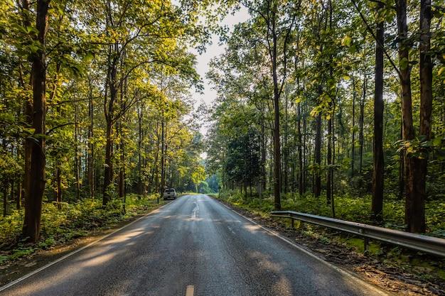 De weg, het teakbos en het ochtendlicht
