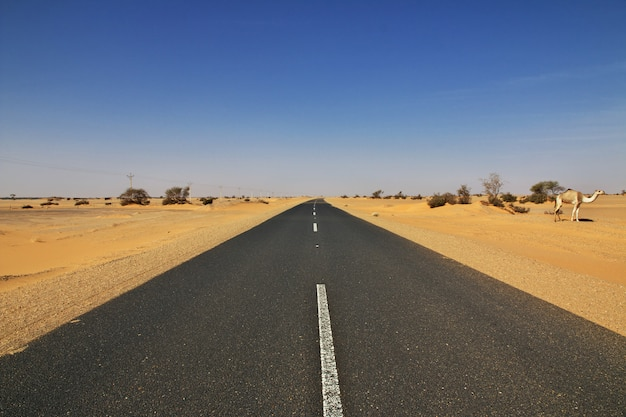 De weg in de sahara woestijn, soedan
