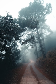 De weg in het bos in de ochtend, in het koude mistige bos