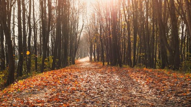 De weg in het park in de late herfst.