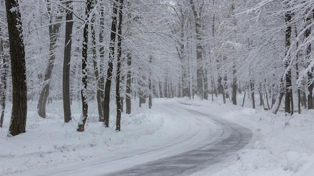 De weg in het winterbos en bomen in de sneeuw op de achtergrond van een bewolkte dag