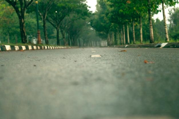 De weg is vol met bomen. onderweg.