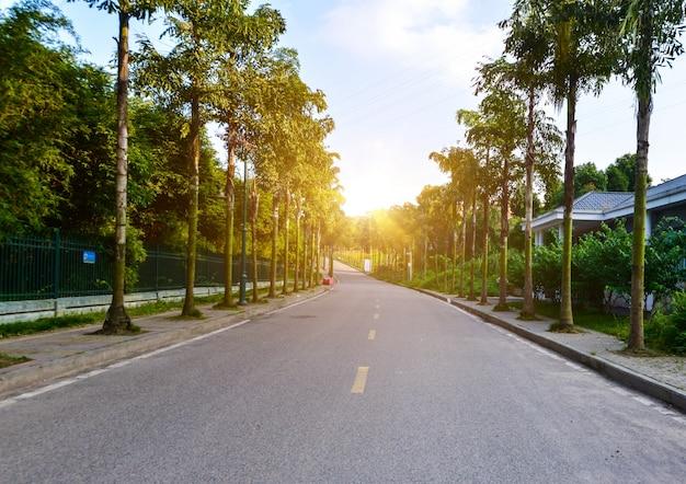 De weg ligt in het bos