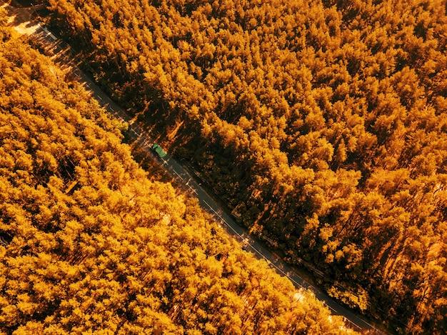 De weg met een passerende auto door het gebladerte van het bos op een zonnige dag. natuurbehoud concept. luchtfoto van de drone als natuurlijke lay-out