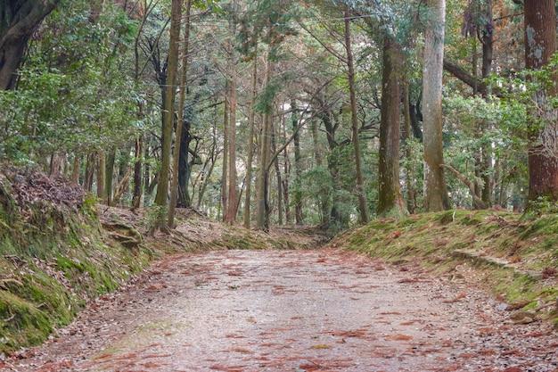 De weg naar natuurlijk groen bosbos.