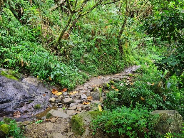 De weg op bergen in banaue, filippijnen