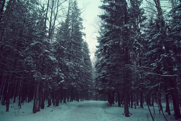 De weg tussen de dennenbomen in de winter, alles is bedekt met een laag sneeuw, toning.