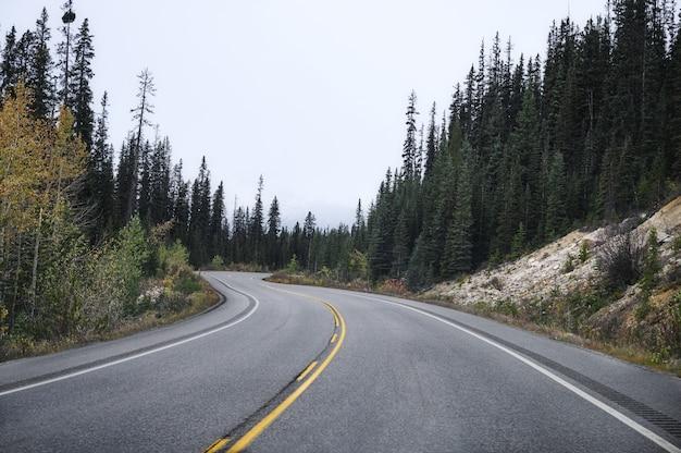 De weg van het wegasfalt in pijnboombos op bewolking bij nationaal park
