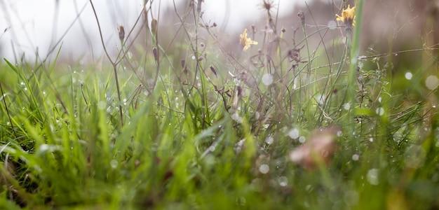 De weide van het landschapspanorama met weelderig grasclose-up met mooie bokeh. natuurlijke groene achtergrond