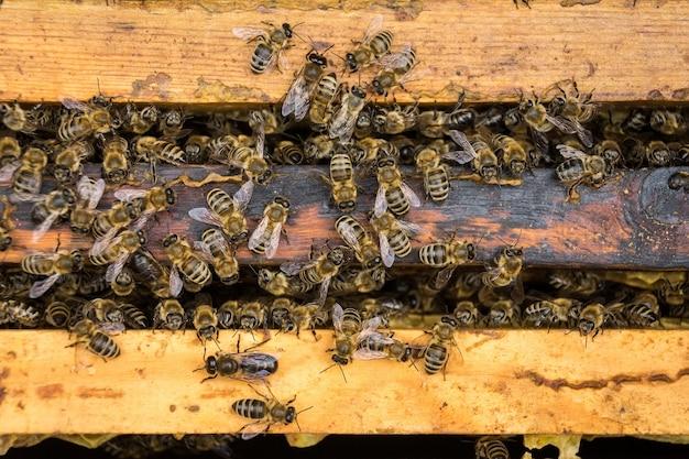 De werkende bijen op honeycells