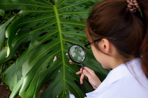 De wetenschapper controleert kruidblad met vergrootglas
