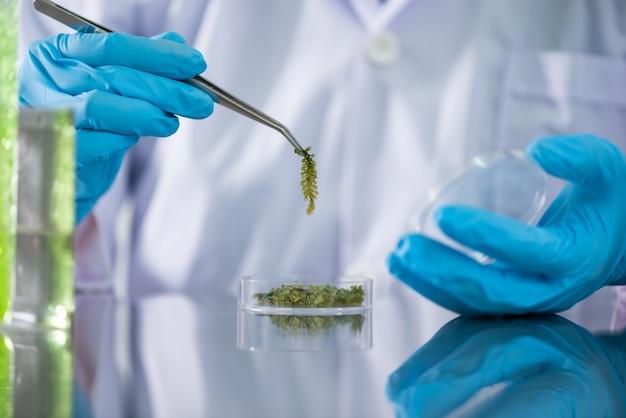 De wetenschapper test het natuurlijke productextract, de olie en de biobrandstofoplossing in het chemielaboratorium.