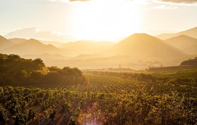 De wijngaarden bij zonsondergang
