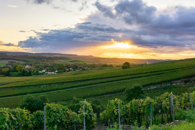 De wijnstokdruif van de rij in champagnewijngaarden bij de achtergrond van het het plattelandsdorp van montagne de reims, reims, frankrijk