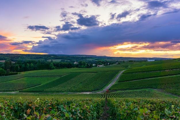 De wijnstokdruif van de rij in champagnewijngaarden bij de achtergrond van het het plattelandsdorp van montagne de reims
