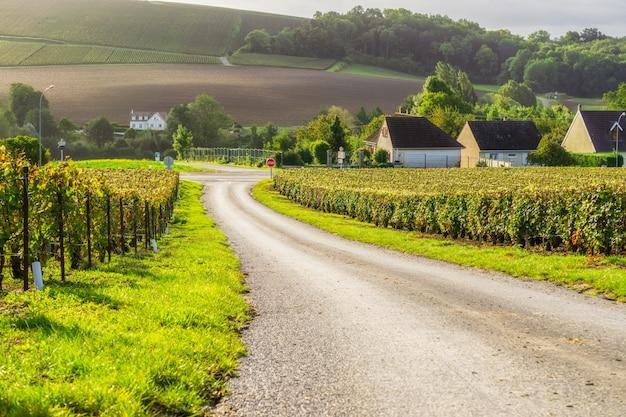 De wijnstokdruif van de rij in champagnewijngaarden bij montagne de reims