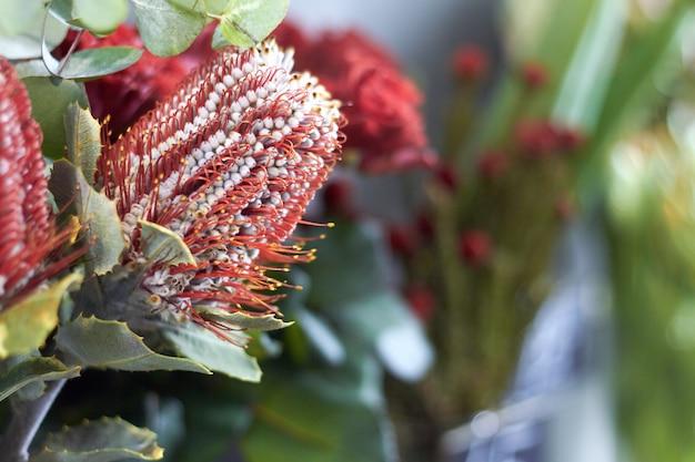 De winkelvenster van de close-upbloem met exotische bloemen, selectieve nadruk