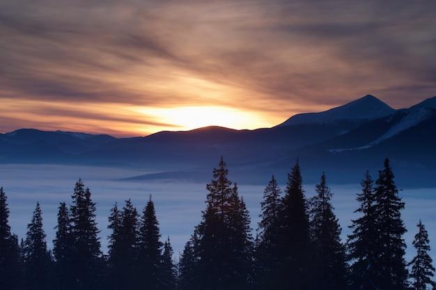 De winterbergen en sparren boven wolken bij zonsopgang