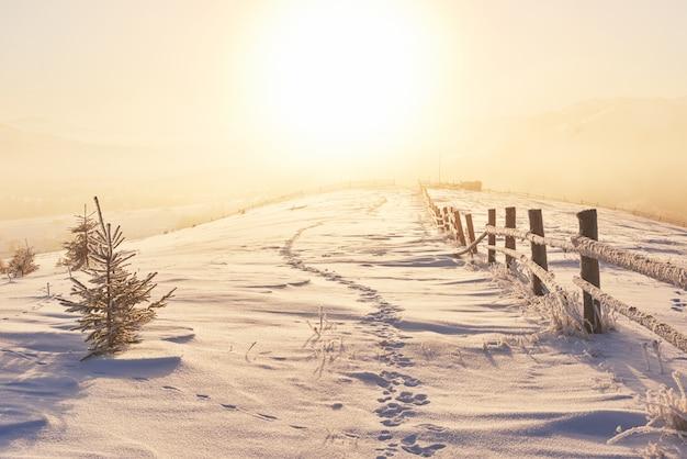 De winterweg. dramatische scène. karpaten oekraïne