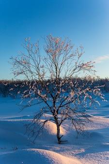 De winterzonsondergang in nuorgam, lapland, finland