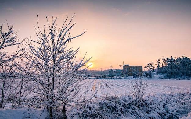 De winterzonsopgang tijdens sneeuwval in zuid-korea