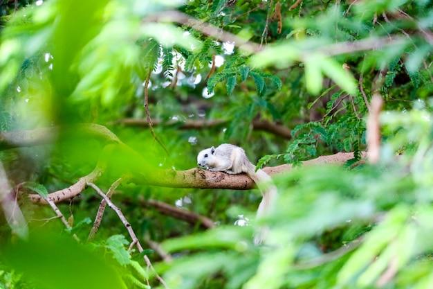 De witte eekhoorn verbergt in schaduw van de bladeren op grote takkenboom