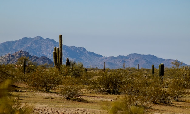 De woestijn van phoenix arizona in wandelingssleep van de zuidenberg met saguarocactus