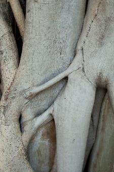 De wortel van de boom.