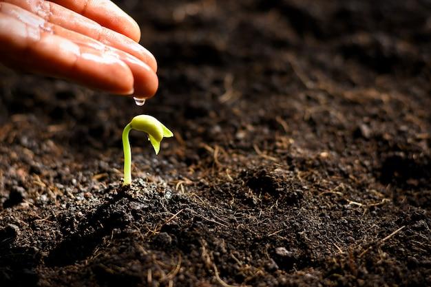 De zaailing groeit in de grond.