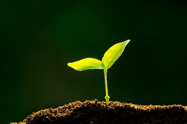De zaailing groeit uit de rijke grond