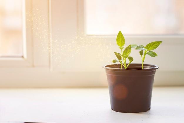 De zaailing groeit van de rijke grond tot het ochtendzonlicht dat schijnt, ecologisch concept. plant kieming en groei.