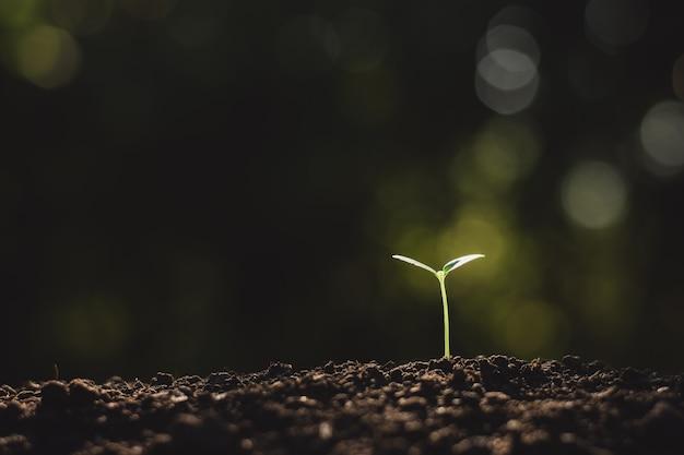 De zaailingen groeien uit de grond.