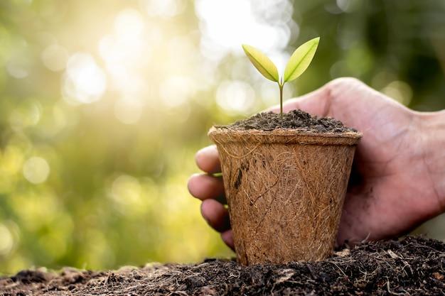 De zaailingen worden gekweekt in potten van kokosvezel.