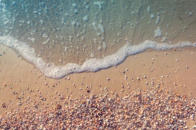 De zeekust van schelpen