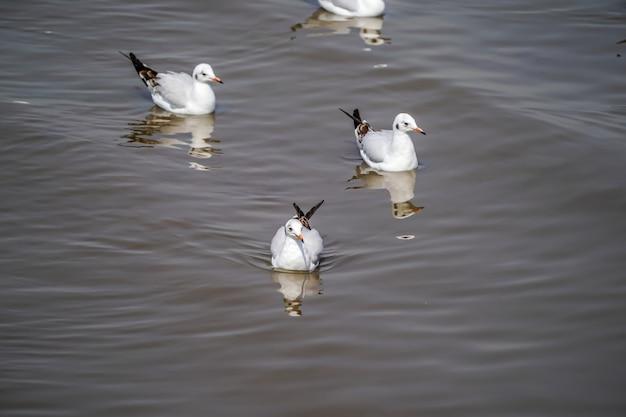 De zeemeeuwvogels op strand en mangrovebos in het land van thailand.