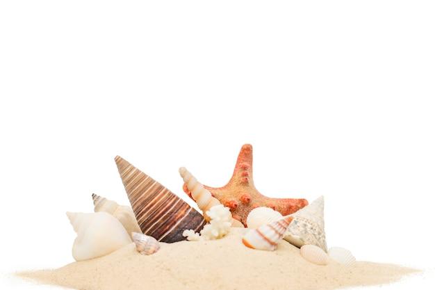 De zeeschelpen in een stapel van zand sluiten omhoog op een wit