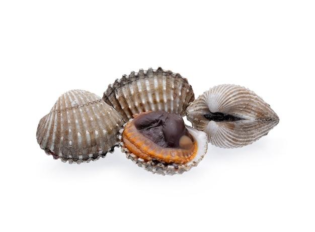 De zeevruchten van kokkels op witte achtergrond worden geïsoleerd die