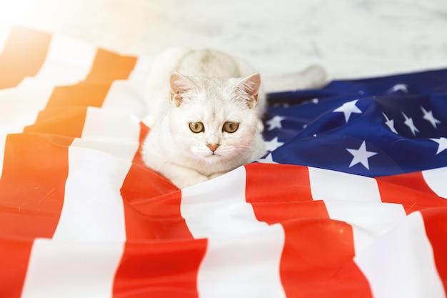 De zilveren britse kat ligt op de amerikaanse vlag. patriottische kat. vs symbool. wachten op de onafhankelijkheidsdag.