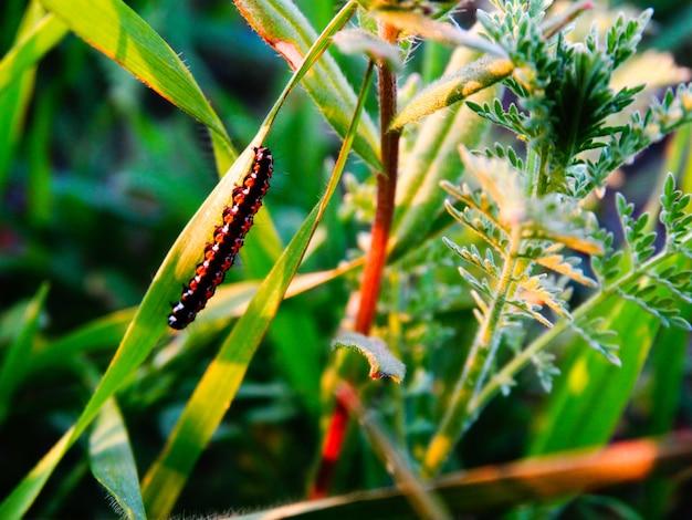 De zomer in bos, wormclose-up