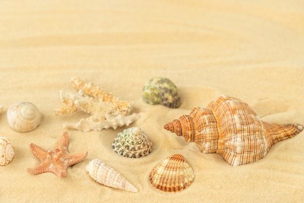De zomersamenstelling met schelpen en zeesterren op het zandstrand