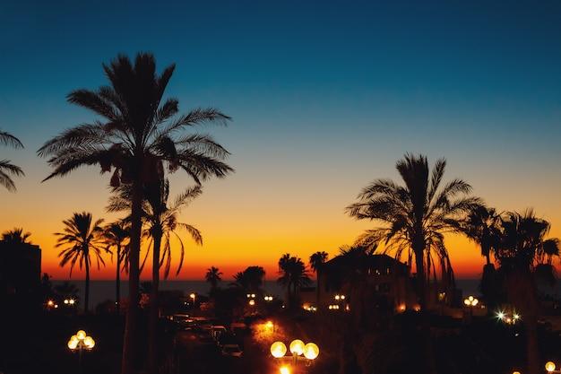 De zomerzonsondergang bij een kustlijn met palm
