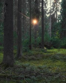 De zon schijnt door een dicht struikgewas in een oud bos