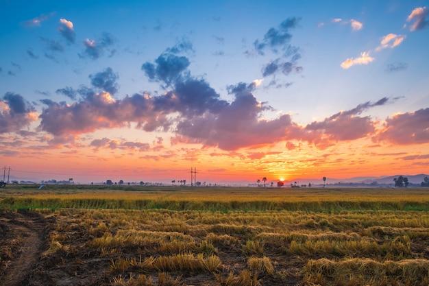 De zonsondergang op het rijstveld