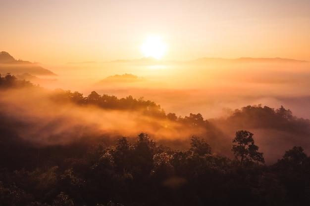 De zonsopgang en de mist in het bos, warme zonneschijn in de ochtend
