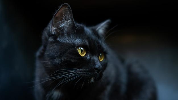 De zwarte kat met gele ogen sluit omhoog